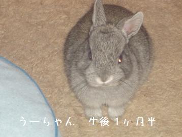 20080518_11.jpg
