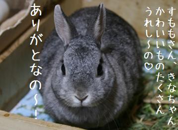 20080518_13.jpg