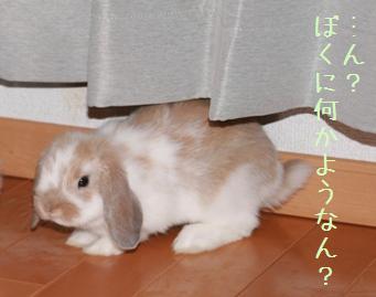20080518_2.jpg