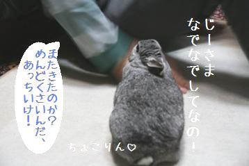 20080522_1.jpg
