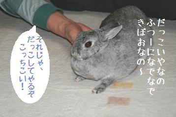 20080522_3.jpg