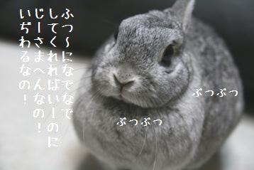 20080522_4.jpg