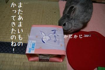20080522_6.jpg