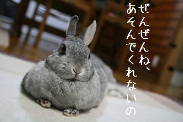 20080528_2.jpg