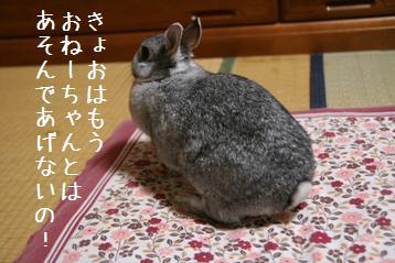 20080530_2.jpg