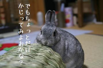 20080601_3.jpg