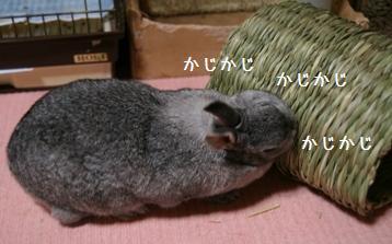20080601_8.jpg