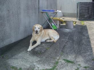 鮑倉庫の犬