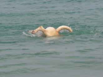 海の偽ウサギぴょーん