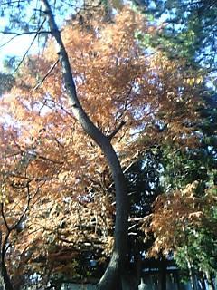 神社で一番綺麗だった紅葉です