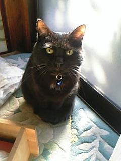 ロクって名前の猫です、由来? 黒を逆から読んでください
