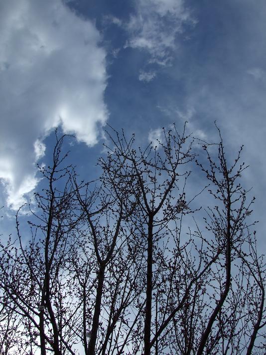 2011_0328多摩湖0137