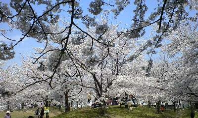 広瀬公園 1