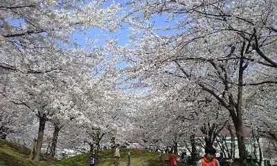 広瀬公園 2