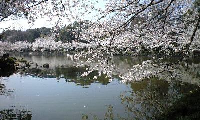 広瀬公園 3