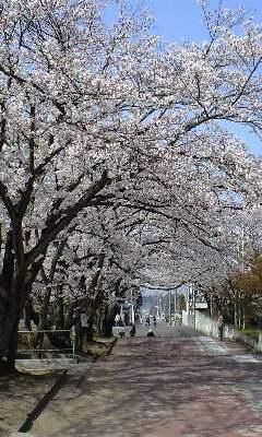 広瀬公園 4