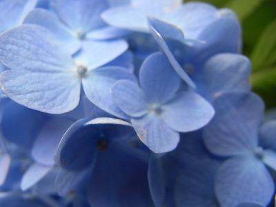 6月はやっぱ紫陽花やねR0022260