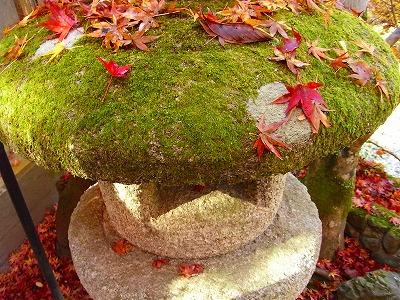 日本に紅葉がないなんて考えられない