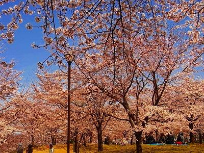 a広瀬邸2011桜