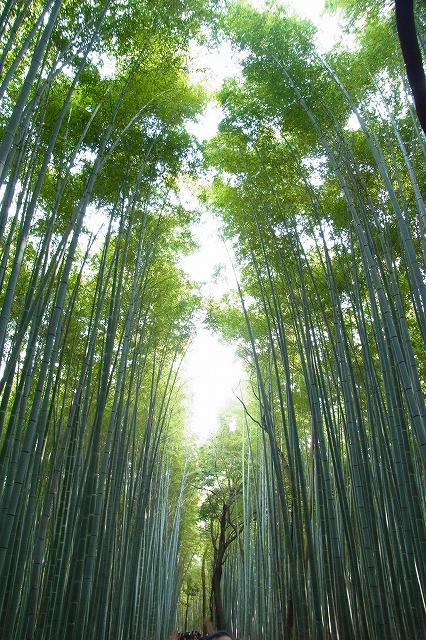天龍寺4 竹林の道