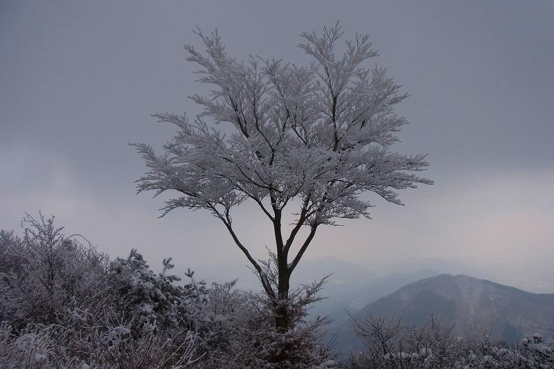 樹氷が見たい4