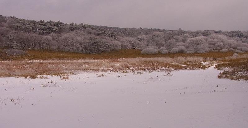 樹氷が見たい3