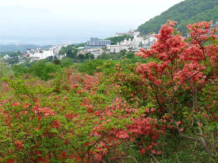 伊香保長峰公園のヤマツツジ