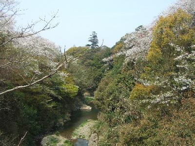 sakura2007_0408(002).jpg