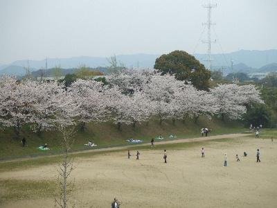 sakura2007_0408(003).jpg