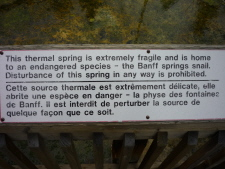 Banff Spring Snail 2