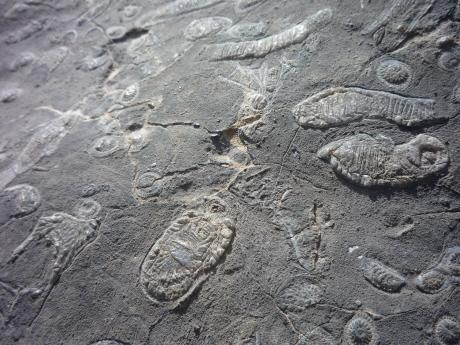 パーカーリッジの化石