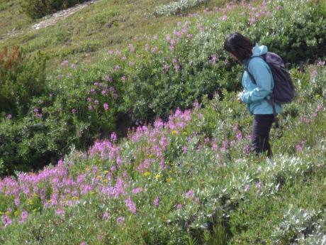 パーカーリッジのお花畑