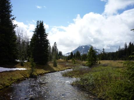 小川も流れてのどかな湖畔の湿地帯