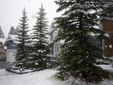 5月12日の雪2