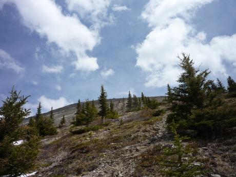 ハ・リンピークの森林限界線