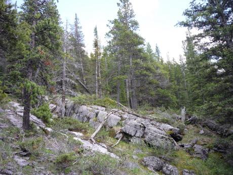 石灰岩の露出