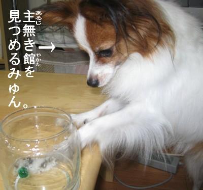 IMG_0826あ