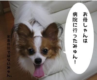 IMG_0850あ