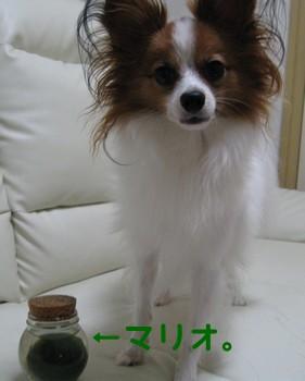 IMG_1044あ