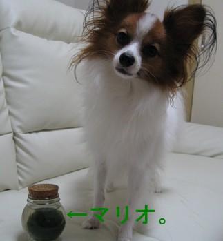 IMG_1045あ