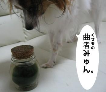 IMG_1041あ
