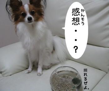まりおi6