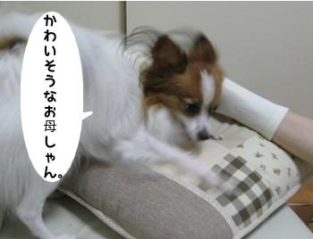 IMG_0979a.jpg