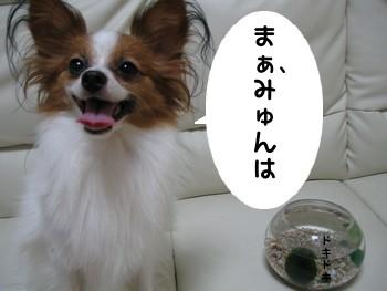 kazoku11.jpg