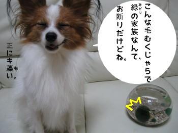 kazoku12.jpg