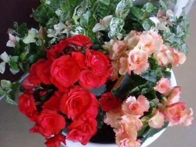 お出迎えの花