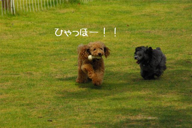 2008.8月豊橋 035 (Small)