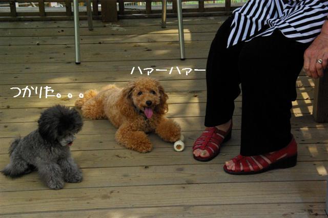 2008.8月豊橋 037 (Small)