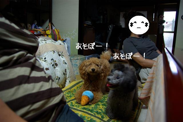 2008.8月豊橋 095 (Small)
