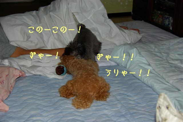2008.8月豊橋 098 (Small)